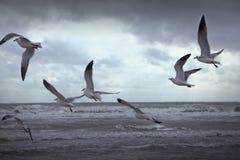 Чайки птиц летая в Lakeshore пляж Стоковые Изображения