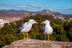Чайки путем говорить стоковая фотография rf