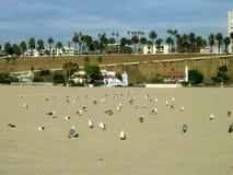 Чайки, пляж Санта-Моника, Калифорния, США Стоковая Фотография