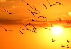 чайки различные Стоковое Изображение RF