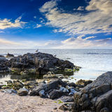 Чайки сидят на больших валунах около волн моря наблюдая Стоковые Фотографии RF