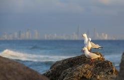 Чайки на пляже Стоковое Изображение RF