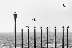 Чайки сидя на лучах около моря Стоковые Фото