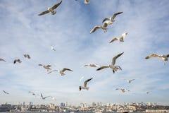 Чайки Стамбула Стоковые Фото