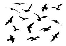 чайки бесплатная иллюстрация