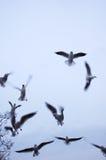чайки стоковые изображения rf