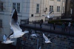 Чайки Стоковая Фотография RF