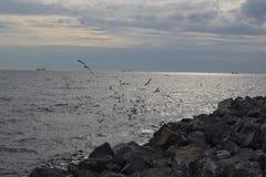 чайки istanbul Стоковое Изображение RF