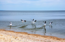 чайки seacoast Стоковые Фото