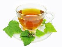 чай выдержки смородины травяной Стоковые Фотографии RF