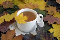 Чай в белой чашке на листьях осени цвета стоковое фото rf