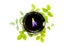 Чай гороха бабочки на белой предпосылке Стоковое Изображение RF