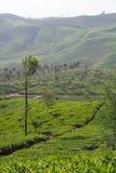 чай земли Стоковое фото RF