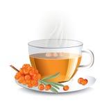 Чай крушины моря в прозрачной стеклянной чашке с помохом Стоковое фото RF
