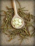 Чай Лабрадора болотоа с пилюльками Стоковое Изображение