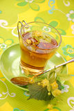 чай липы стоковая фотография
