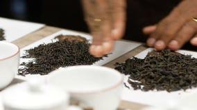 Чай лист черноты касания руки человека большой на белой предпосылке перед degustation r видеоматериал