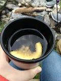 Чай на траве с лимоном и тимианом стоковое изображение