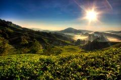 чай плантации гористой местности cameron Стоковое Изображение RF
