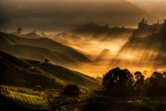 чай плантации гористой местности cameron Стоковые Фотографии RF