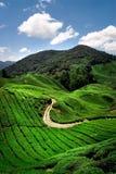 чай плантации горного склона Стоковые Изображения