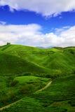 чай плантации boh Стоковое Изображение RF