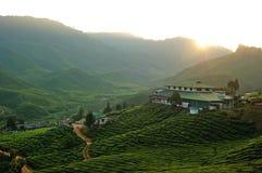 чай плантации sunrising Стоковое Изображение