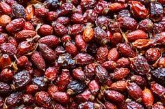 Чай плодоовощ плода шиповника, собирает целебные плоды шиповника в осени, красном источнике плодов шиповника витамин C Стоковое Фото
