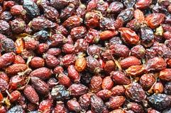 Чай плодоовощ плода шиповника, собирает целебные плоды шиповника в осени, красном источнике плодов шиповника витамин C Стоковые Фото