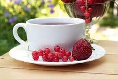 чай плодоовощ Стоковое Изображение