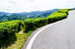 чай плантаций Малайзии Стоковые Фото