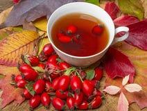 Чай плода шиповника Стоковое Фото