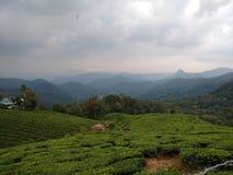 чай сада Стоковая Фотография RF