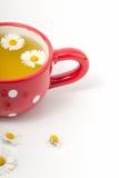 Чай стоцвета в чашке Стоковые Фотографии RF