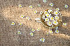 Чай стоцвета на мешковатой ткани, солнечном луче утра Стоковые Фотографии RF