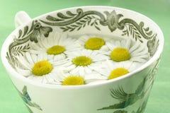 чай стоцвета травяной Стоковые Фотографии RF