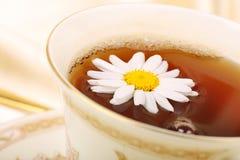 чай стоцвета Стоковые Фотографии RF