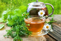 Чай с заживление маргариткой Стоковое Изображение RF