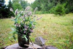 Чай с одичалой мятой в древесине Стоковое фото RF