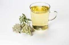 Чай тысячелистника обыкновенного coomon стоковое фото rf