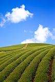 чай фермы воздушного шара зеленый Стоковая Фотография RF
