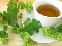 чай хламиды ladys Стоковые Изображения
