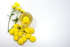 Чай хризантемы Стоковые Изображения RF