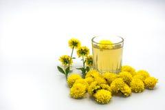 Чай хризантемы Стоковое Изображение RF