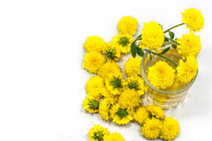 Чай хризантемы Стоковое Изображение