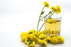 Чай хризантемы Стоковые Фото