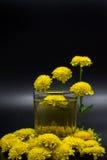 Чай хризантемы Стоковое фото RF