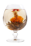 чай цветка стеклянный зеленый Стоковые Изображения RF