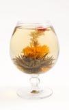 чай цветка стеклянный зеленый Стоковые Фото
