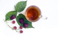 чай чашки травяной Стоковое Фото